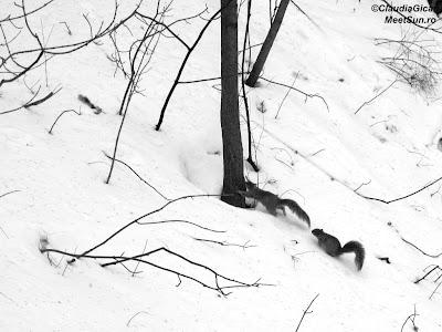 Joacă de veverițe.