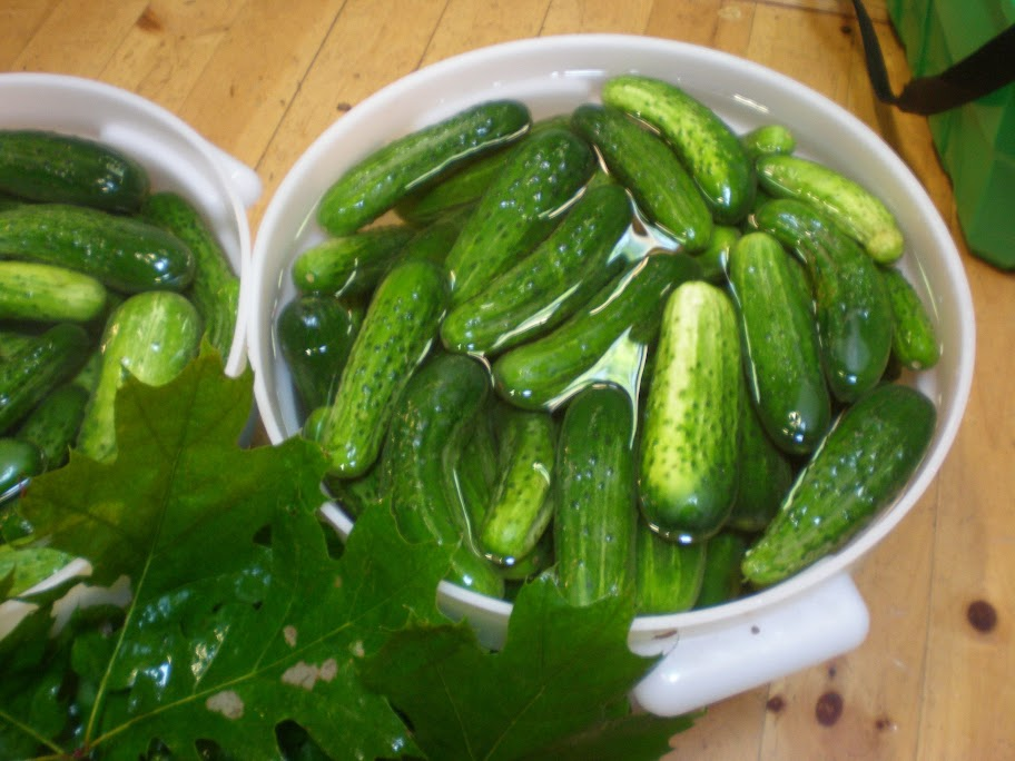 A half-bushel of cucumbers comes to about twenty-four pounds.