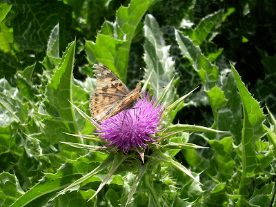 Image result for A Brief Note on Milk Thistle Healing Qualities