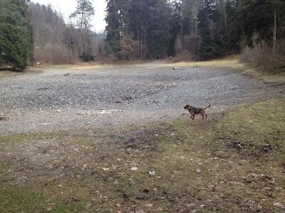 Hund Charly sucht den See.