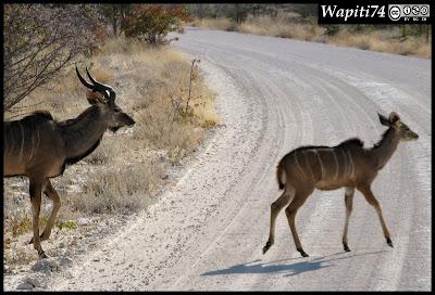 Balade australe... 11 jours en Namibie IMG_0357