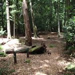 Eastern end of Leura Forest (93148)