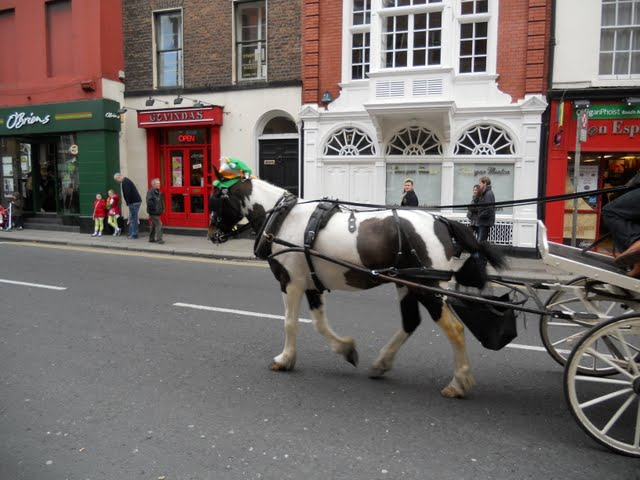 Celebrating St. Patrick's Day in Dublin Ireland - Horse Wearing a Hat