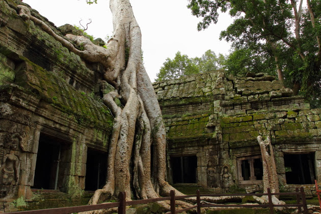 The jungle setting of Ta Prohm temple, Siem Reap, Cambodia