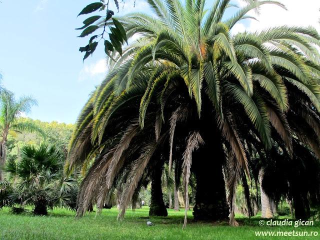 Roma. Palmierii din grădina botanică