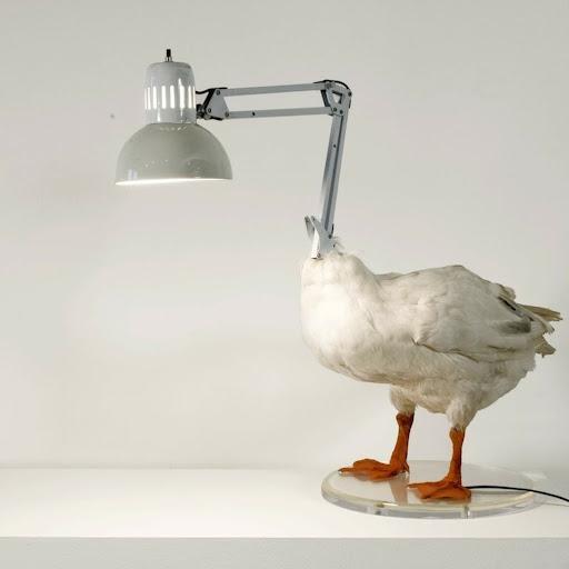 Ducky D.