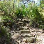Steps south of Robinson Creek (371506)