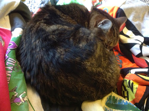 Kiki sleeping on the Project Repat t-shirt quilt