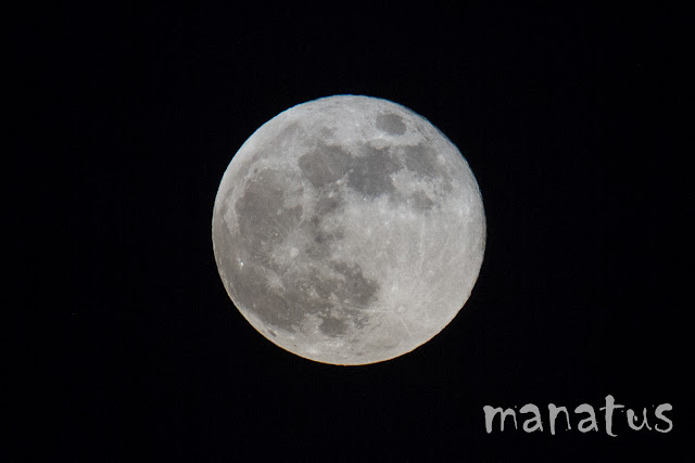 Luna manatus foto blog noche
