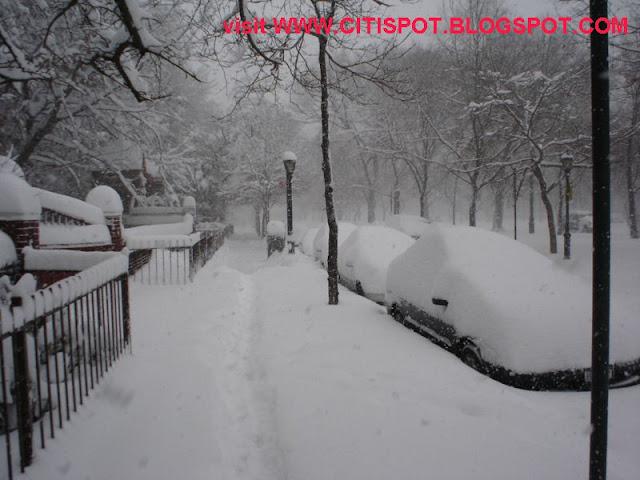 senzible nature blizzard