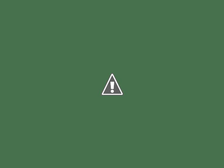 Заячий кроссворд. Как я охотился на зайца в даурских степях
