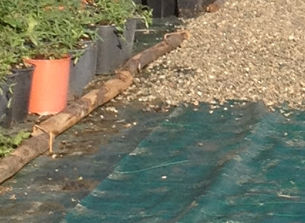 Ghiaia decorativa in giardino aiuole con sassi vialetti - Vialetti da giardino ...
