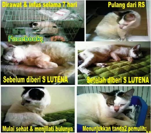 Gangguan Ginjal Pada Kucing