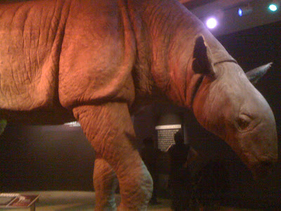 The Indricotherium