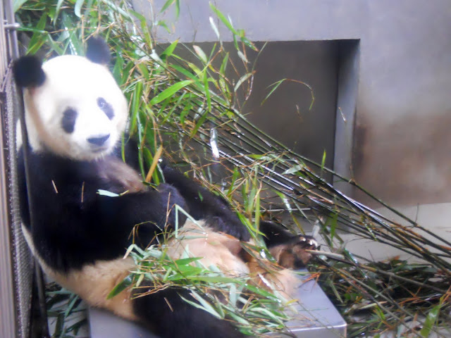 Step away from my bamboo!