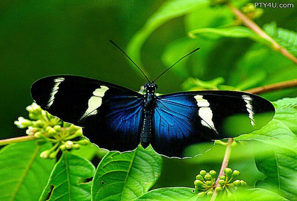 Blue Beautiful Butterfly Hd Wallpaper   Photo Wallpapers