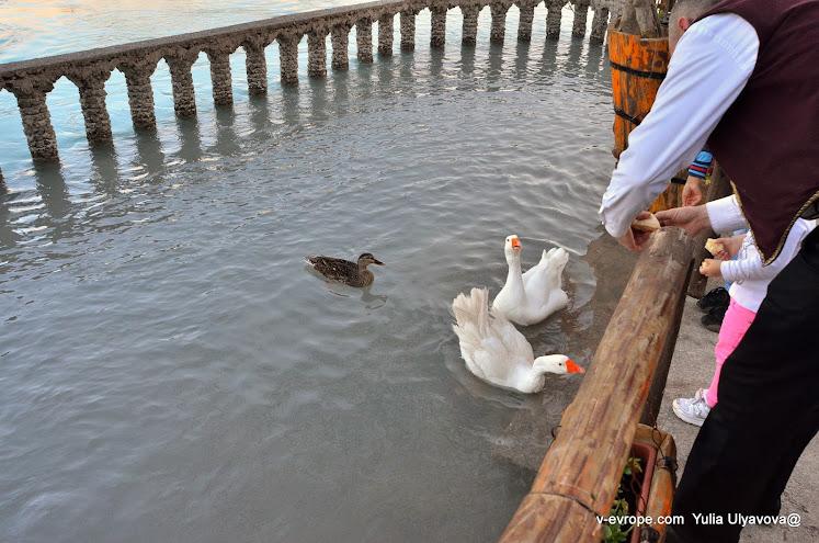 Ниагара, дети и официанты кормят уток. Черногория