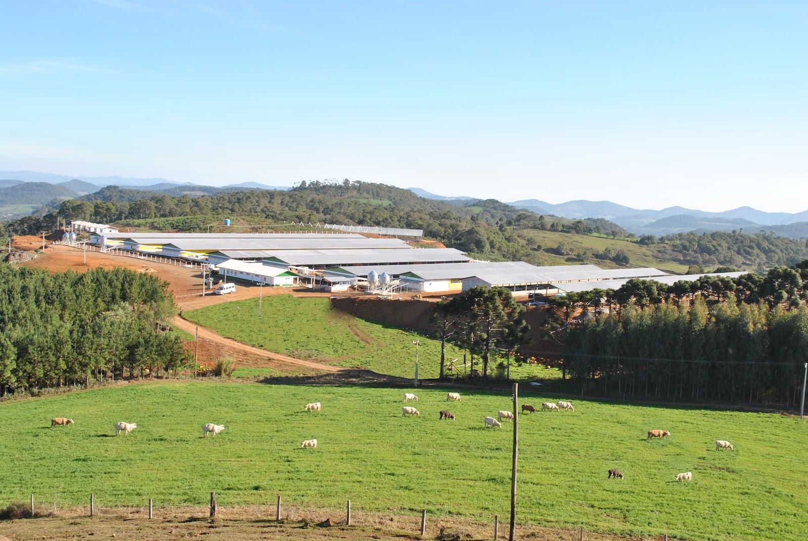 Suinocultura: Agropecuária Carboni e Pen Ar Lan iniciam produção em novo núcleo genético DSC 00862