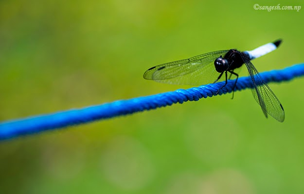 Shooting a dragon fly through my camera