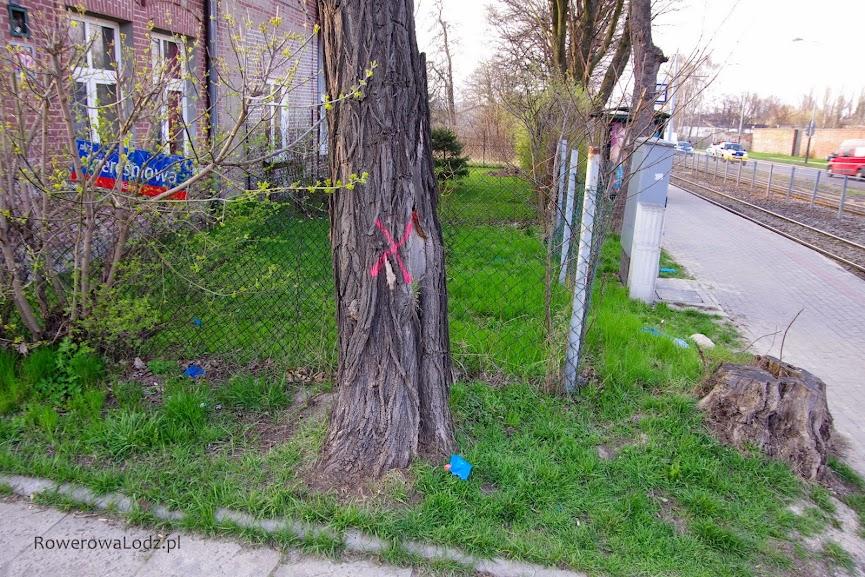 Drzewo, którego niestety nie udało się ominąć.