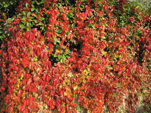 Piante e fiori fiori e piante per il balcone il for Piante da frutto nord italia