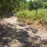 Green Point Reserve bushland (402334)