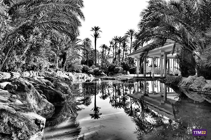 Nikon D5100, 18-55 mm, Paisajes, HDR, Blanco y negro, Palmeras, Parque El Palmeral, Alicante, Parques, Árboles, Reflejos,