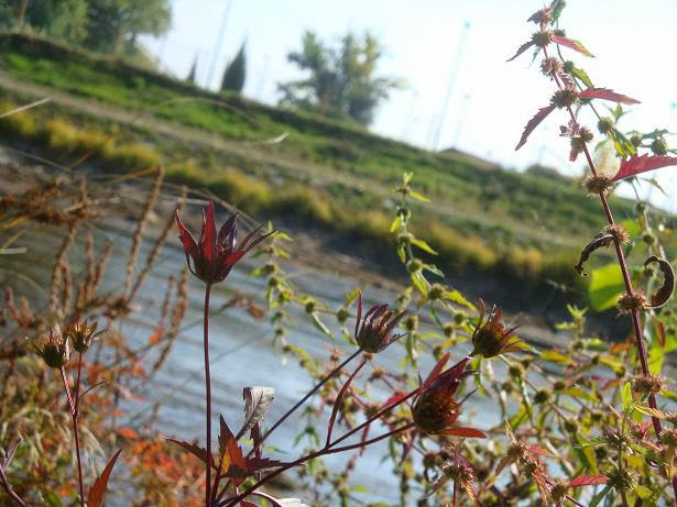 трава на берегу