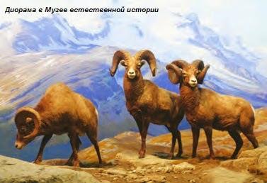 От Большого каньона – до мегаполисов, или Америка глазами запорожского натуралиста