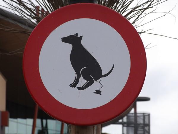 cartello divieto feci cane dettaglio