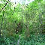 Narrow track beside Sugarloaf Creek (383084)