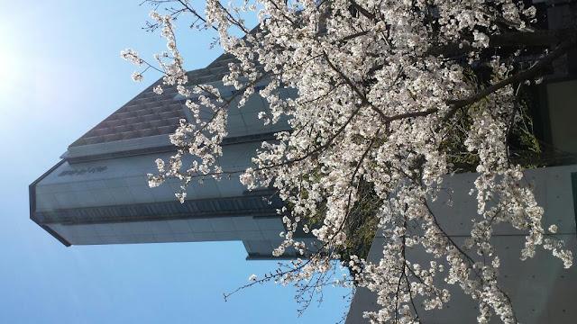 國學院大學 渋谷キャンパス, Japan, 〒150-8440 東京都渋谷区 東4丁目10−28