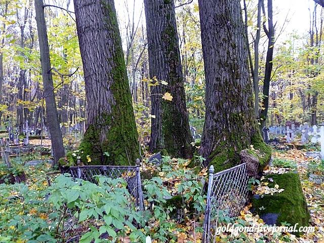 На семейной площадке деревья вросли в ограду