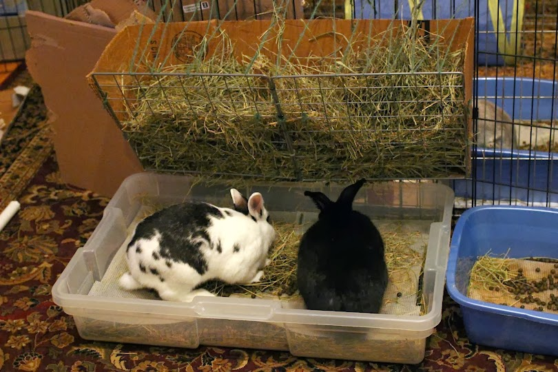 For The Past Year Of Bunny Ownership I Have Been Using A Couple Litter Box Setups That Are Great At Making It Easy To Dump Used Hay And Poops Regularly