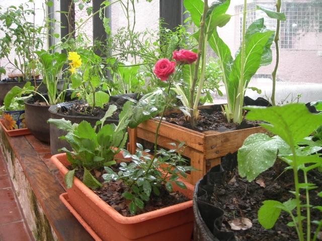 Mi huerto en casa agricultura organica for Cultivo de verduras en casa