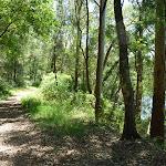 Walking along the trail near Floods Creek (373540)