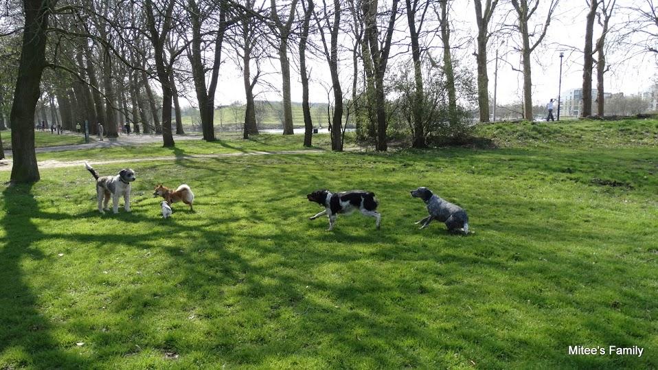 Balades canines en Nord (59)/Pas de Calais (62) - Boulogne-sur-Mer, Calais et Lille - Page 4 DSC01821