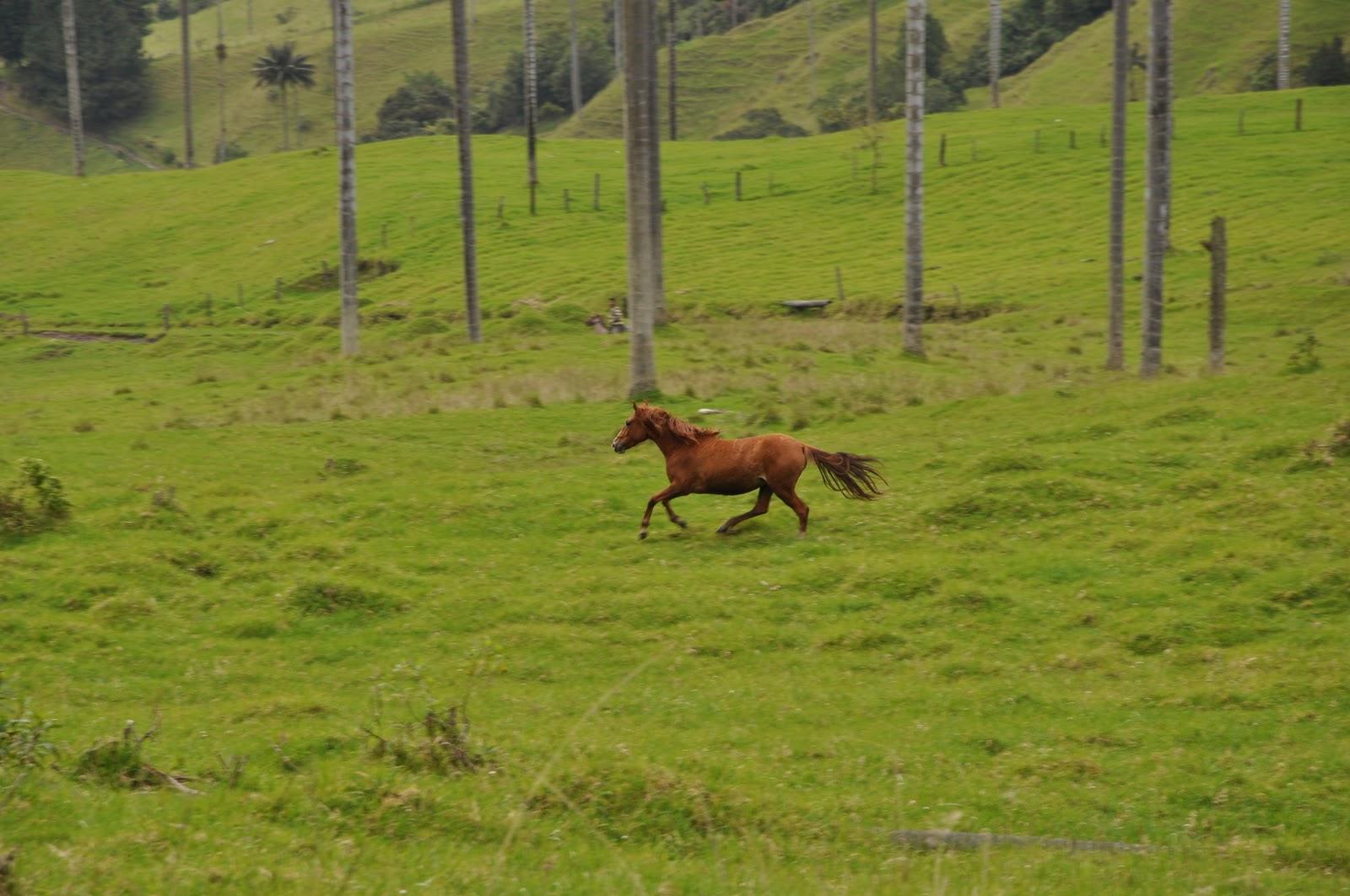 reifer kolumbianischer großer Esel