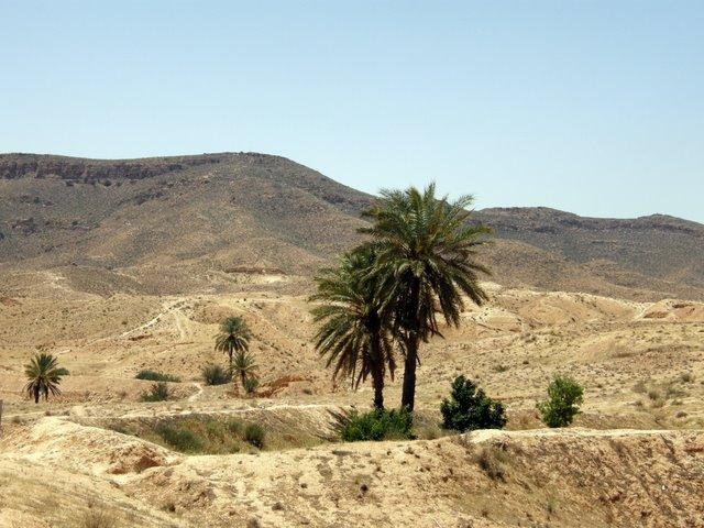 Пустынный оазис