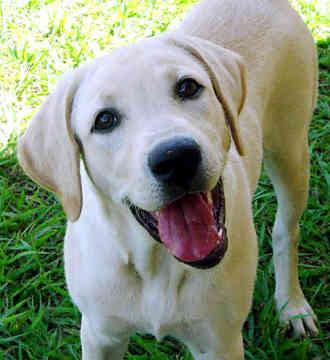 Dog Friendly Eau Claire Wi