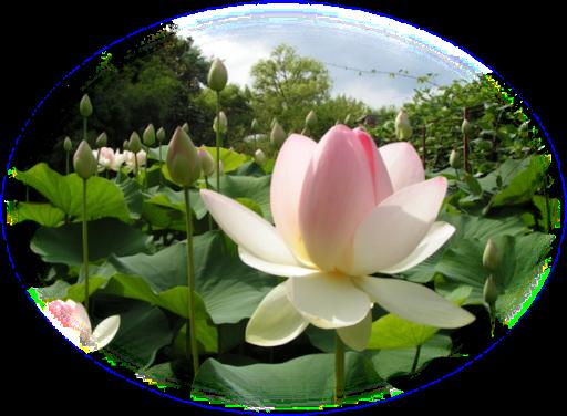 blomster%2520diamonds%2520eventyrland%2520%252820%2529.png