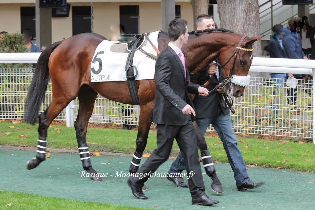Photos Auteuil 2-11-2014 (48h de l'obstacle) IMG_5438