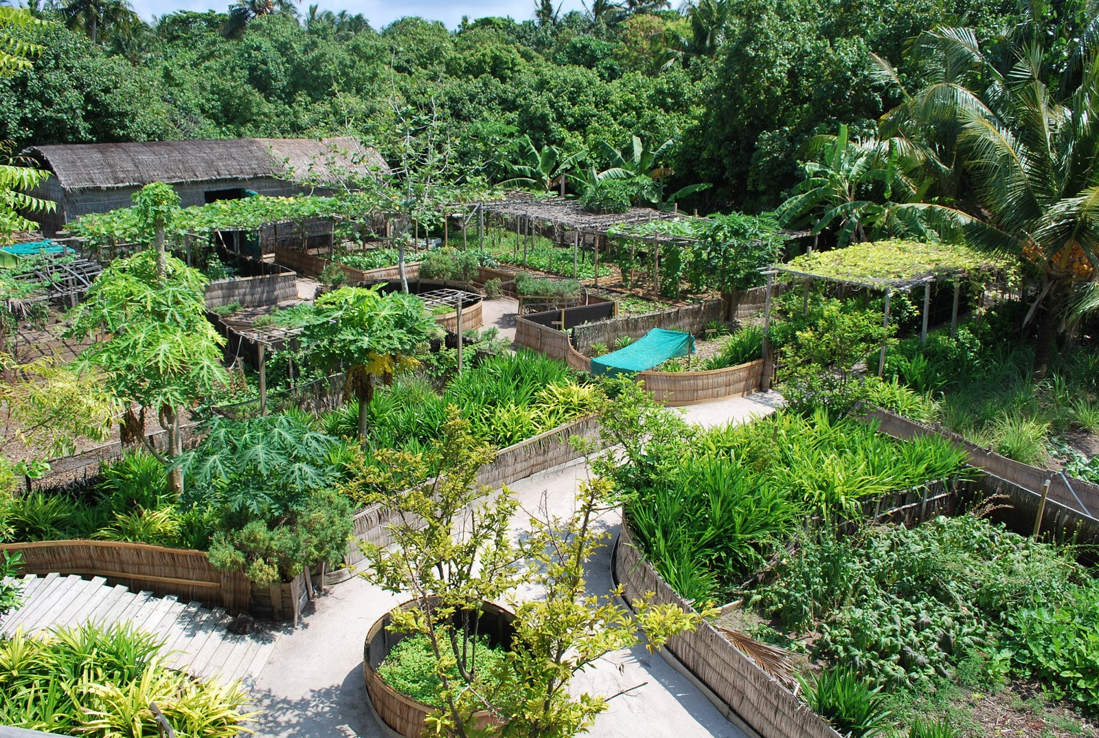 Permaculture maldives fresh in the garden for Jardin permaculture