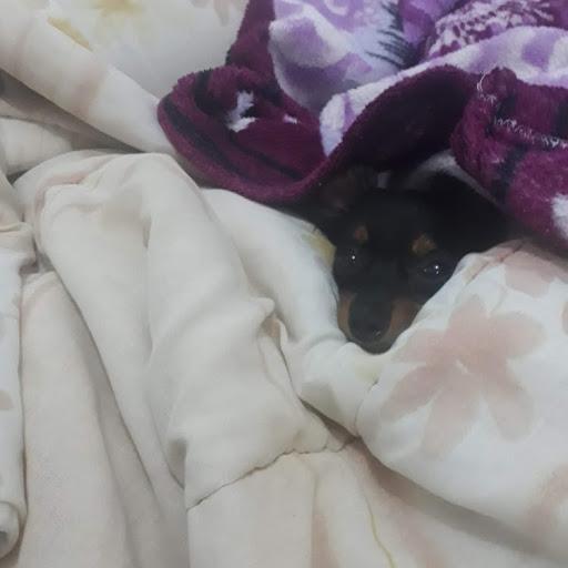 Gato no Teto