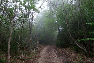 Nos adentramos en el bosque