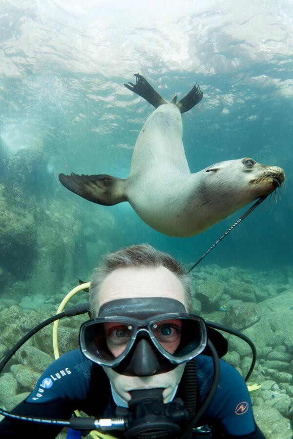 mergulhador tirando uma selfie com uma foca atrás