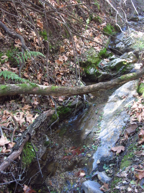 a bit of creek flowing along rock layers