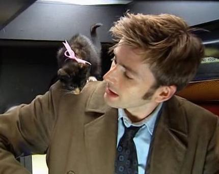 David Tennant and a kitten
