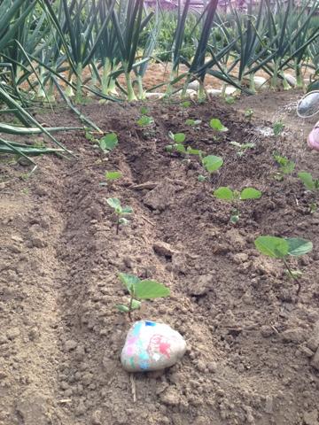 少し成長した枝豆