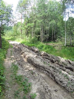 Дорога к Вазерскому лесничеству